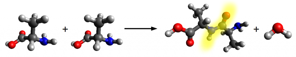Reaction of two alanine molecules.  The peptide bond is highlighted in yellow.